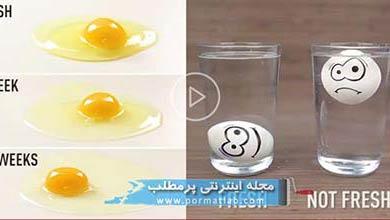 Photo of 28 ترفند خلاقاته با تخم مرغ
