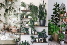 Photo of ۱۷ عکس و ایده گیاهان برای دکوراسیون اتاق