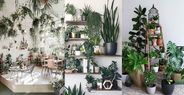 Photo of 17 عکس و ایده گیاهان برای دکوراسیون اتاق