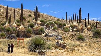 Photo of جاذبههای پارک ملی huascaran