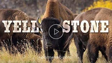Photo of پارک طبیعی یلواستون yellowstone