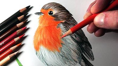 Photo of آموزش نقاشی پرنده سینه سرخ با اتد