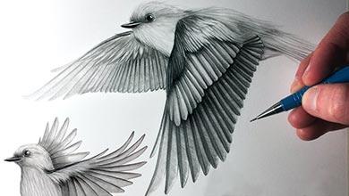 Photo of آموزش نقاشی پرندهها در حال پرواز