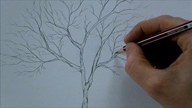 Photo of نقاشی درخت با مداد سیاه برای افراد مبتدی