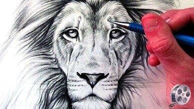 Photo of آموزش نقاشی شیر سلطان جنگل