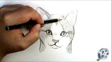 Photo of نقاشی و طراحی صورت گربه