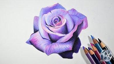 Photo of نقاشی گل رز با مداد رنگی