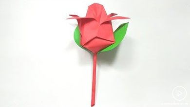 Photo of گل نیلوفر آبی کاغذی