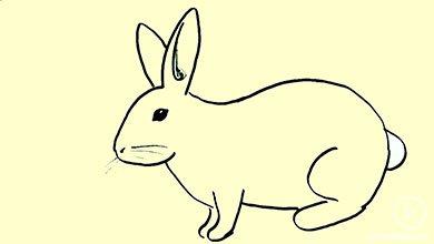 Photo of نقاشی خرگوش بانی با مداد سیاه