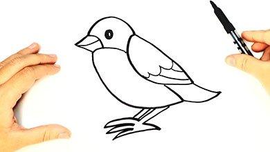 Photo of نقاشی پرنده برای کودکان