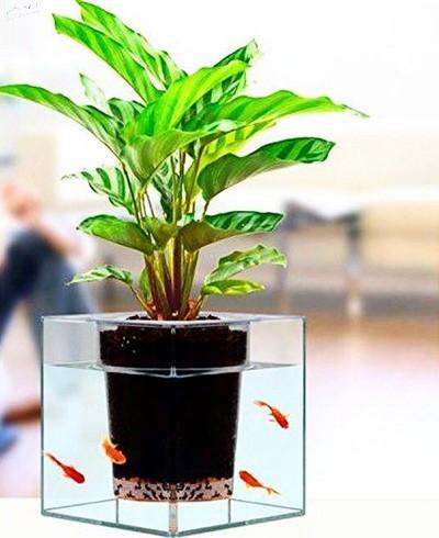 تزیینات زیبای تنگ ماهی, ایده هایی برای تزیین تنگ ماهی